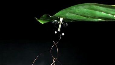 Flying Robot: Bio-inspired Robot Perches, Resumes Flight